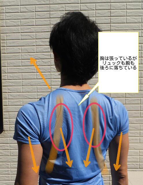 「肩甲骨を前方に起こす」