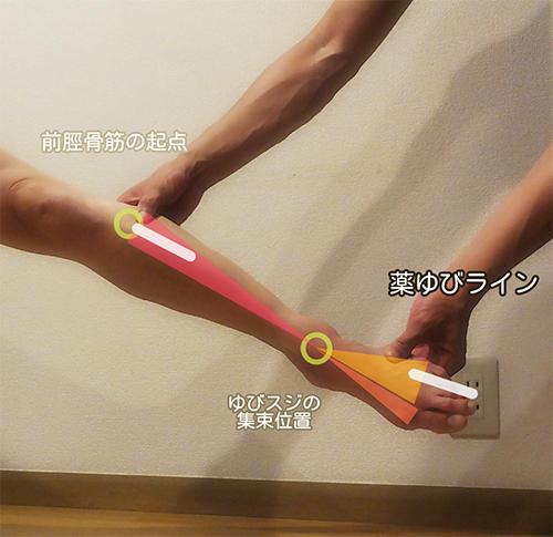 「薬指が筋肉のラインの中心」
