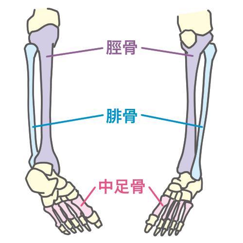 「中足骨とひ骨」