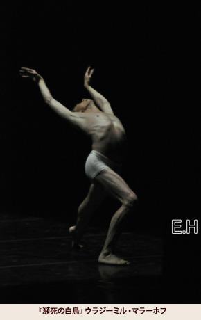 「瀕死の白鳥」ウラジミール・マラーホフ