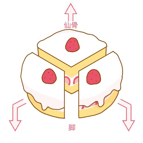 丸いケーキを3等分したとイメージ