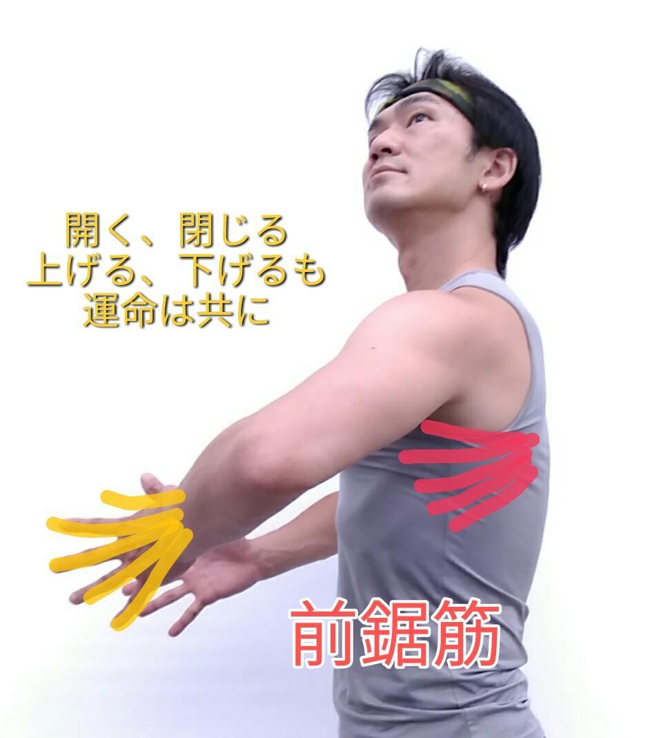 手と前鋸筋.jpg
