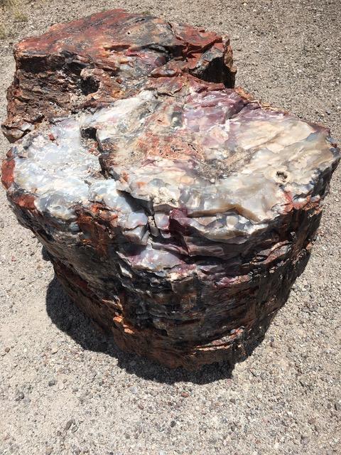木の化石2.jpeg