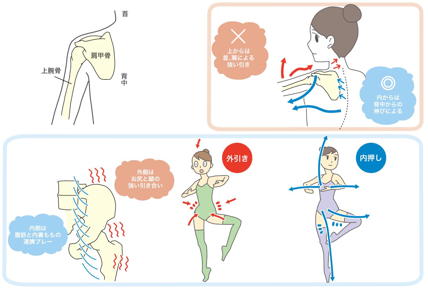 股関節と肩関節内外の流れ.png