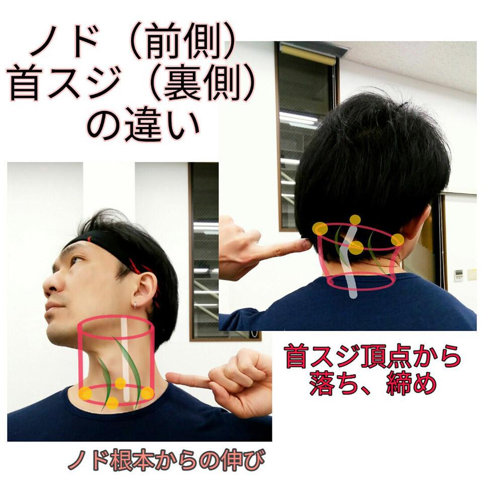 ノドと首裏の違い.jpg