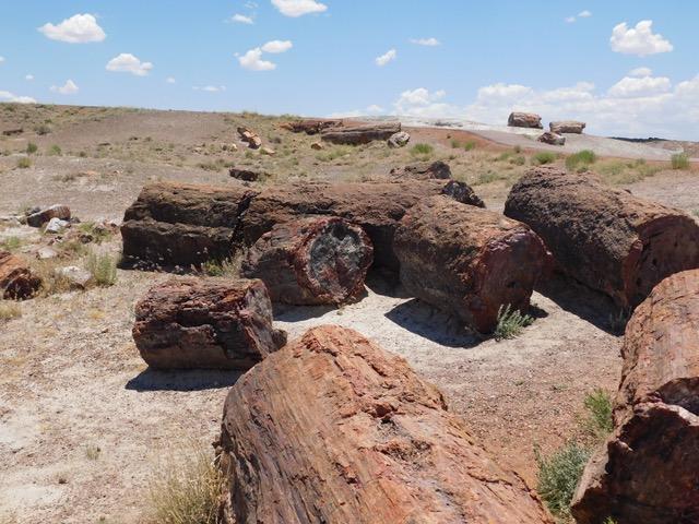 木の化石.jpeg