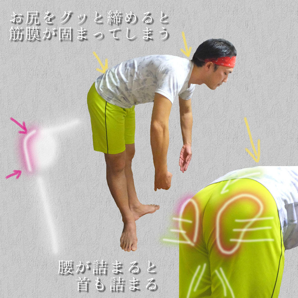 股関節とお尻のイメージ2.jpg