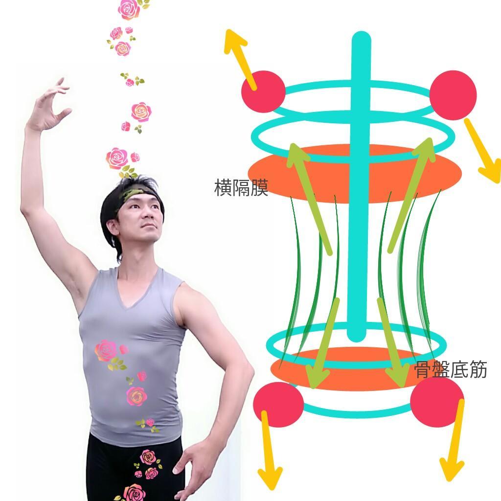 開いた肋骨と腹筋.jpg