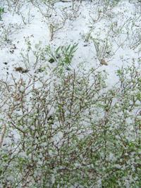 3月5日突然の雪