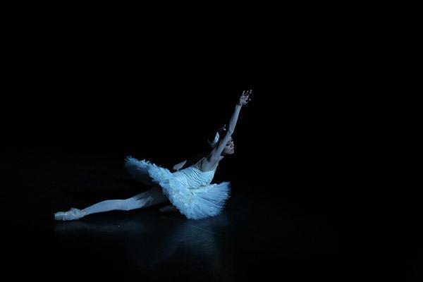 「瀕死の白鳥」撮影/谷岡秀昌
